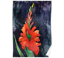 watercolor drawing of red gladiolus Poster