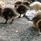 Ducklings by KarmaSparks