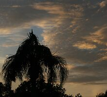 Tropical Night by Jim Roche
