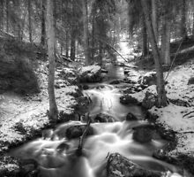 Stream in forest by franceslewis