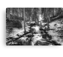 Stream in forest Canvas Print