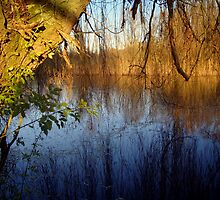 Willow Reflections by Kate Towers IPA