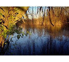 Willow Reflections Photographic Print