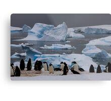 Gentoo Penguin Colony, Antarctic Peninsula Metal Print