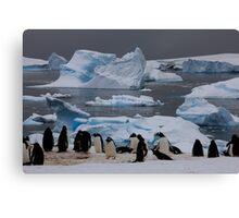 Gentoo Penguin Colony, Antarctic Peninsula Canvas Print