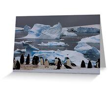 Gentoo Penguin Colony, Antarctic Peninsula Greeting Card
