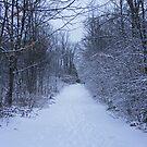 Winter Path by Ben Kelly