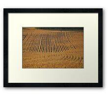 Soyfield Series - Field Shot Framed Print