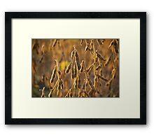 Soyfield Series - Closeup Shot Framed Print