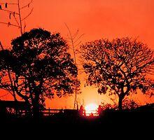 Sunset in the Brazilian savannah by jcpatricio