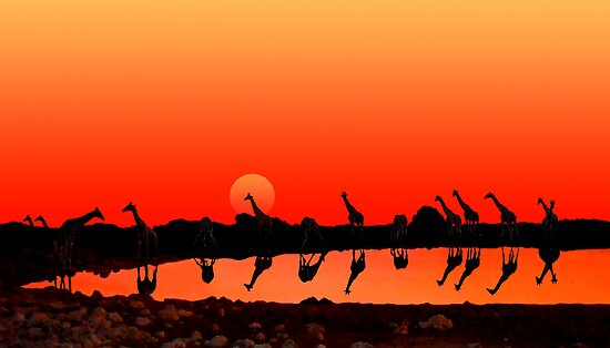 SUNSET WITH GIRAFFES by Michael Sheridan