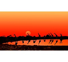 SUNSET WITH GIRAFFES Photographic Print