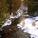 Stream in Winter by Larry Llewellyn
