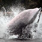 Whale Jump by evmphotos