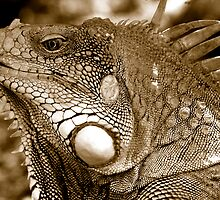 Big Iguana by Dan Sweeney