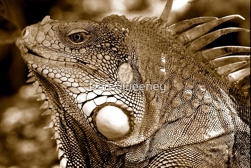 Big Iguana by Dan Sweeney