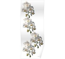 Orchid Border Poster