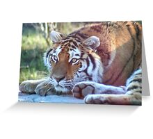 Eyes of the Amur Tiger Greeting Card