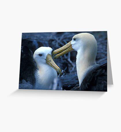 Albatros Pair on Galapagos Greeting Card
