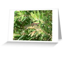 Bottlebrush with Red Skimmer Greeting Card