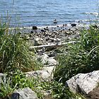 the shore of white rock, BC by memaggie