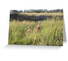 Kangaroos 2 Greeting Card