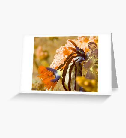 Nembrotha Purpureolineolate Nudibranch Greeting Card
