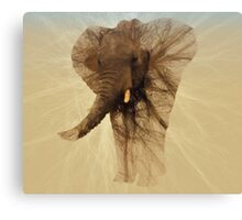 Loxodonta Africana by M.A Canvas Print