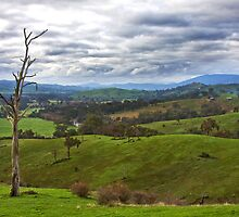 Acheron cutting- Goulburn River view by Vicki Moritz
