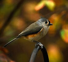 Late Autumn Visitor by Lois  Bryan