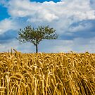 Single tree in a field of Wheat by Dave Hare