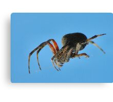 Spider on a wire Canvas Print