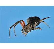 Spider on a wire Photographic Print