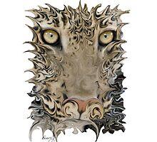 Wild Cats by Diane Giusa