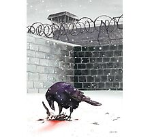 Crow, Bloody Snow Photographic Print