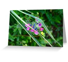 Sunset Flowers Greeting Card