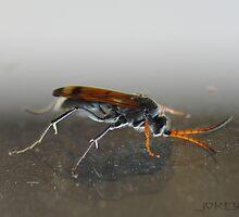 wasp by Joker