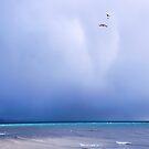Spirit Of The Gull by Susie Peek