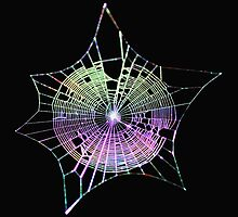 Rainbow Spider Web by Laural Retz Studio