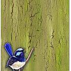 Fairywren by Alex Tebb