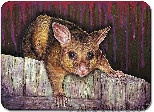 Possum by Alex Tebb