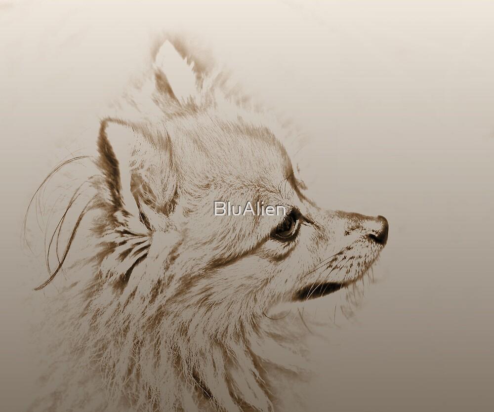 Profile Of A Pomeranian by BluAlien