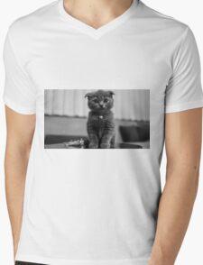 Kitten Mens V-Neck T-Shirt