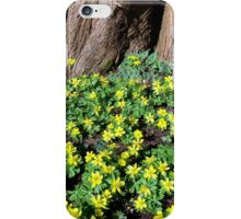 Winter Aconite  iPhone Case/Skin