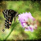 Swallowtail Dreams by Jonicool