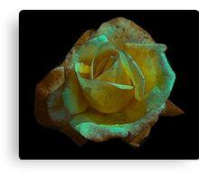 Rose -#2 Canvas Print