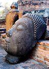 Discarded Buddha by Dave Lloyd