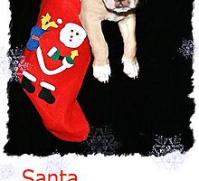 CHRISTMAS CARD PUPPY#2 by BOLLA67