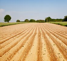 Ploughed agriculture field empty by Arletta Cwalina