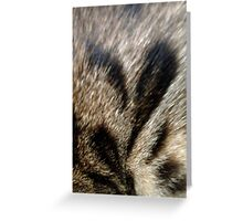 Heart on a Bengal Cat Greeting Card